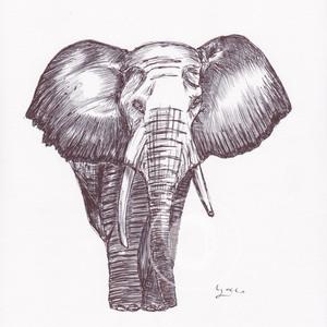 300 elephant cr